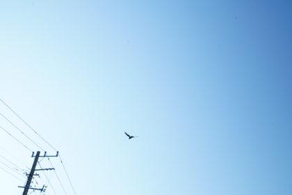 青い空を飛ぶ鳥と電柱