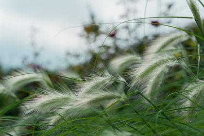 きらめく草原