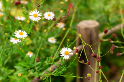 箱根湿生花園の秋の草花