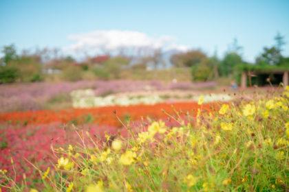 神奈川県立花と緑のふれあいセンター 花菜ガーデンの風景