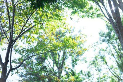 木立から降り注ぐ陽の光